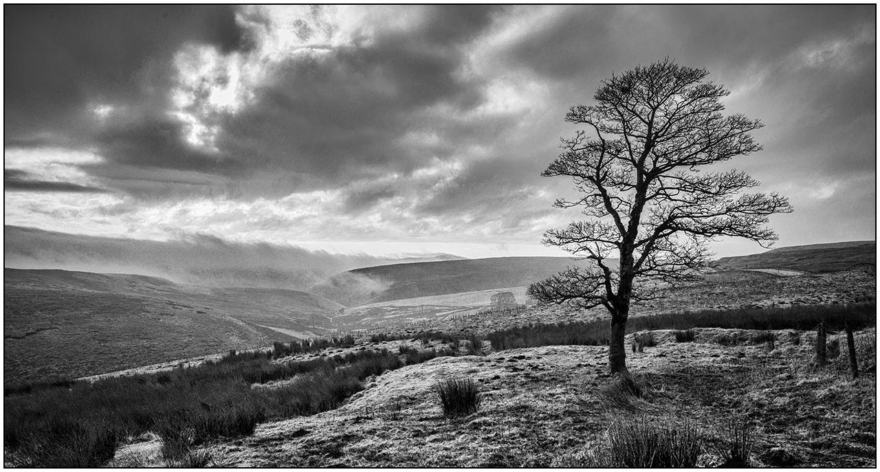 dane-valley-tree